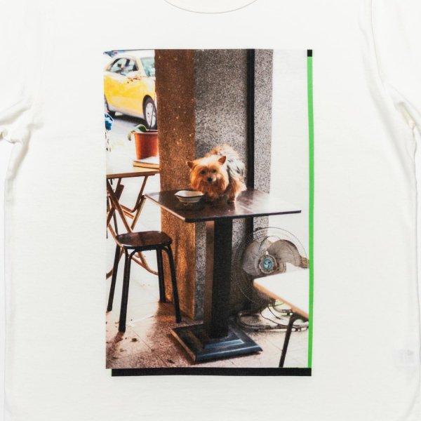 Table Dog photography by Reiko Toyama designed by Satoshi Suzuki