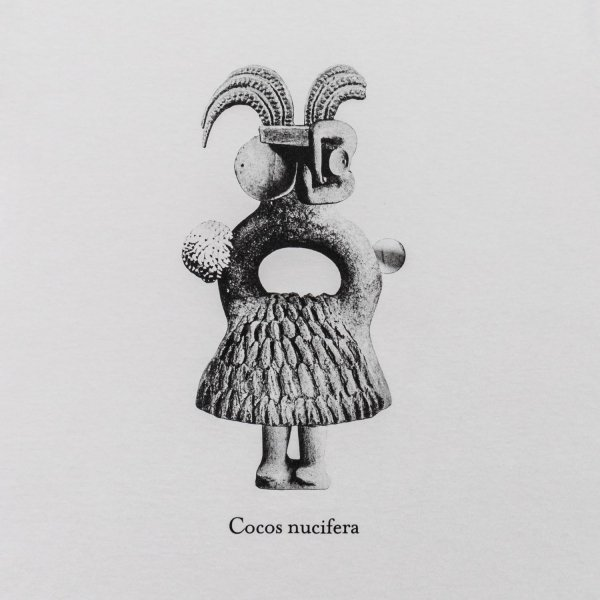 Cocos Nucifera (ココヤシ) by Takahiro Murahashi